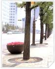 토목용목재